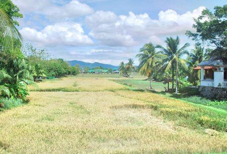 Laman Padi Langkawi