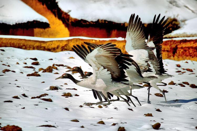 다산바오 검은목두루미 자연보호구역