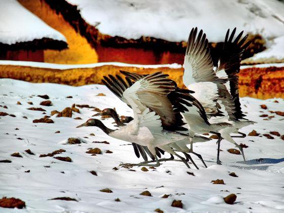 大山包黑頸鶴自然保護區