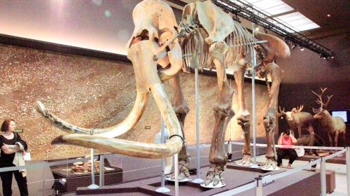 Museum of Prehistoric Anthropology