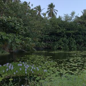 하와이,추천 트립 모먼트