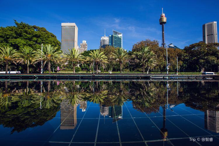 Sydney Tower3