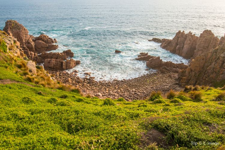 Phillip Island Nature Park4