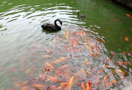 Nanpingjiufeng Zoo