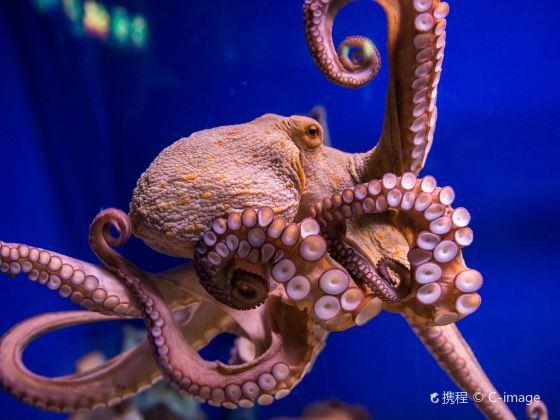 Xuzhou Aquarium Exhibition Hall