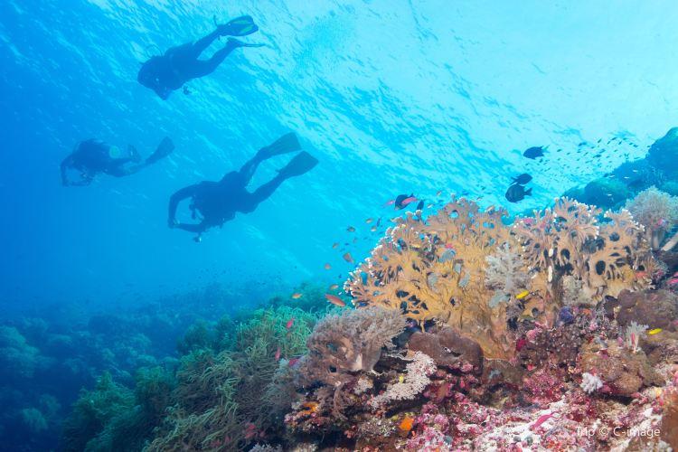 Tubbataha Reef National Park1