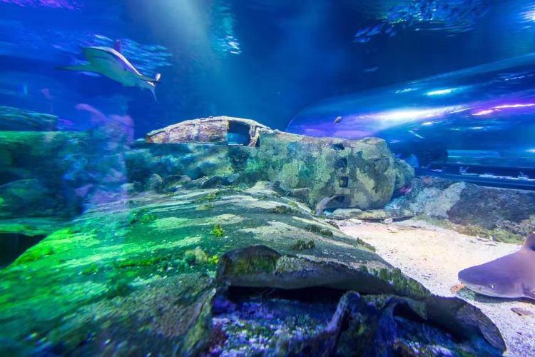 海底世界2