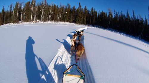 Green Mountain Dog Sled Adventures
