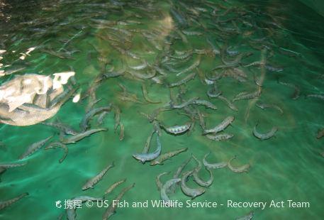 Margaree Fish Hatchery