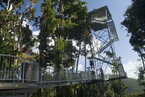 瑪姆雨林天空步道