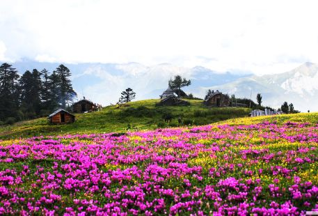 Dujuan Huahai Flower Forest