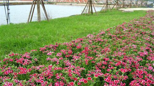 Yueyang Cherry Blossom Garden