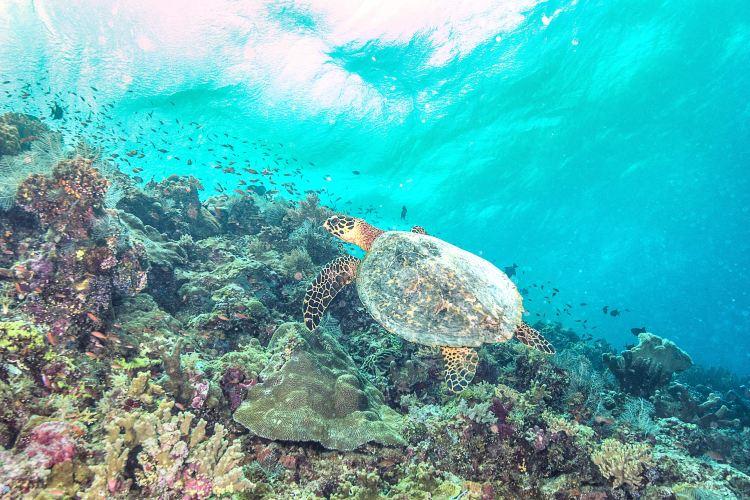 Tubbataha Reef National Park