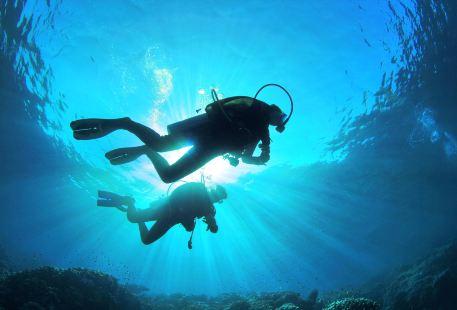 慶良間諸島ダイビング体験