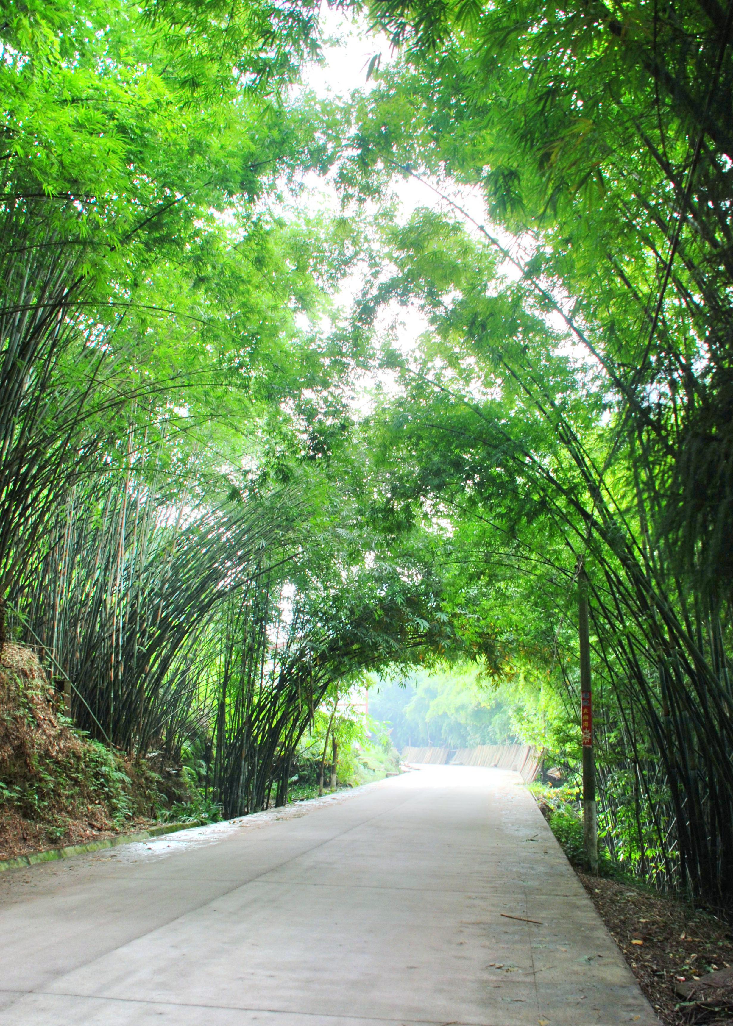 赤水竹海公園