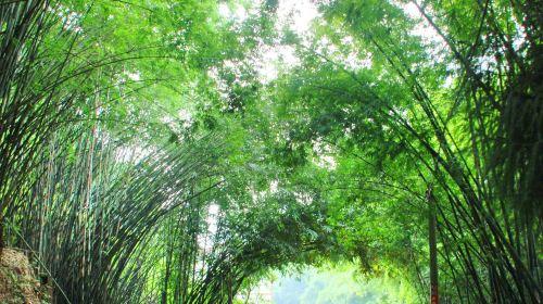 Chishui Bamboo Park