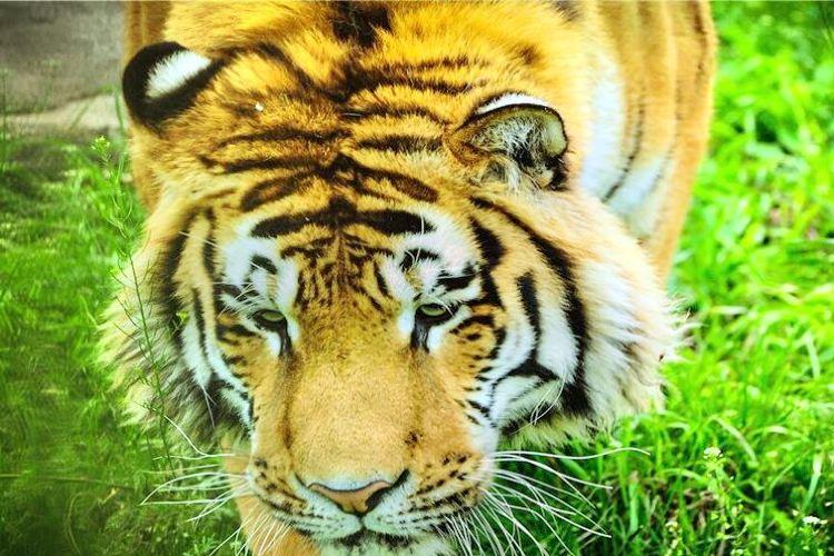 Qinling Wildlife Park1