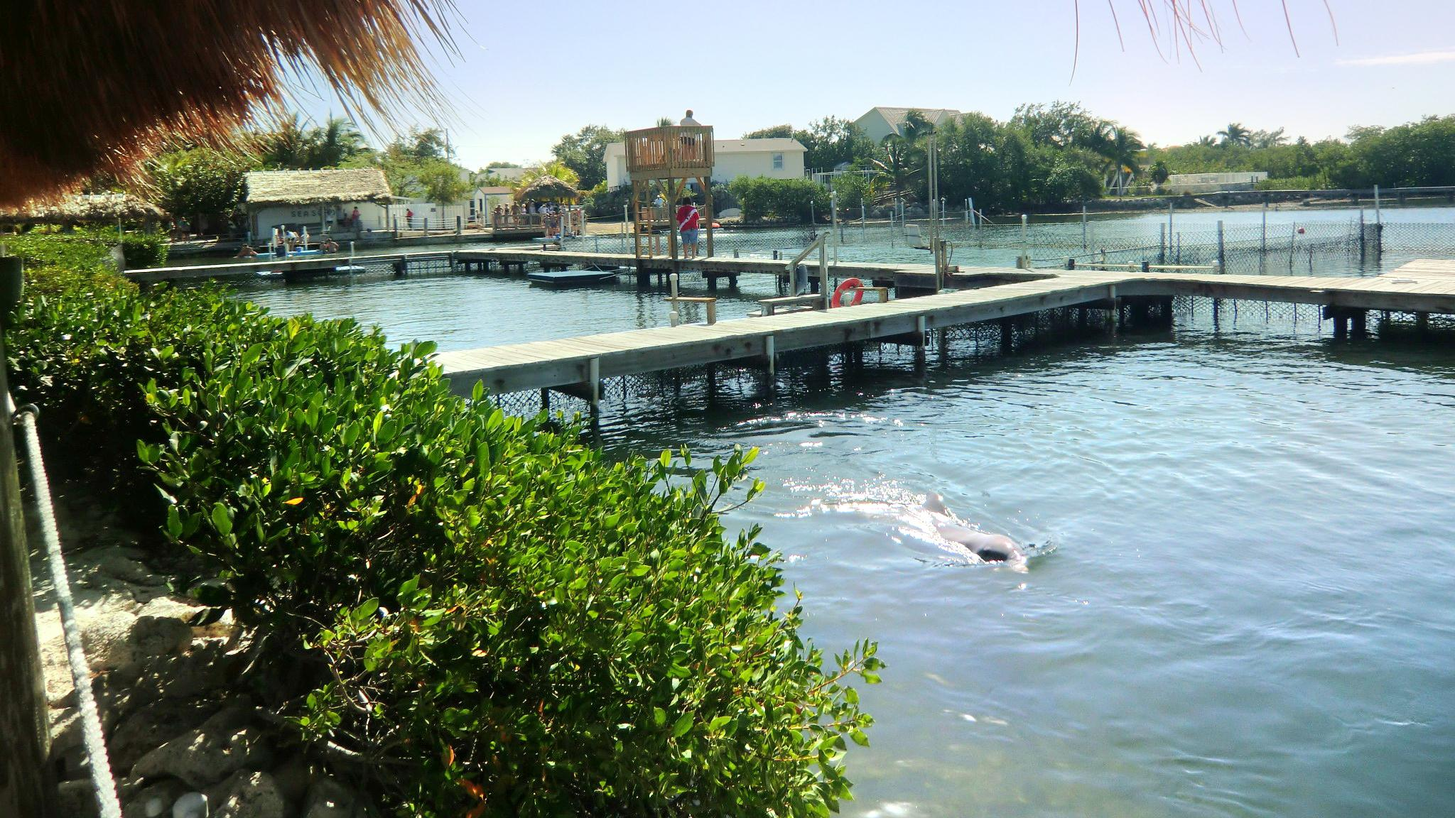 South Padre Island Dolphin Research & Sea Life Nature Center
