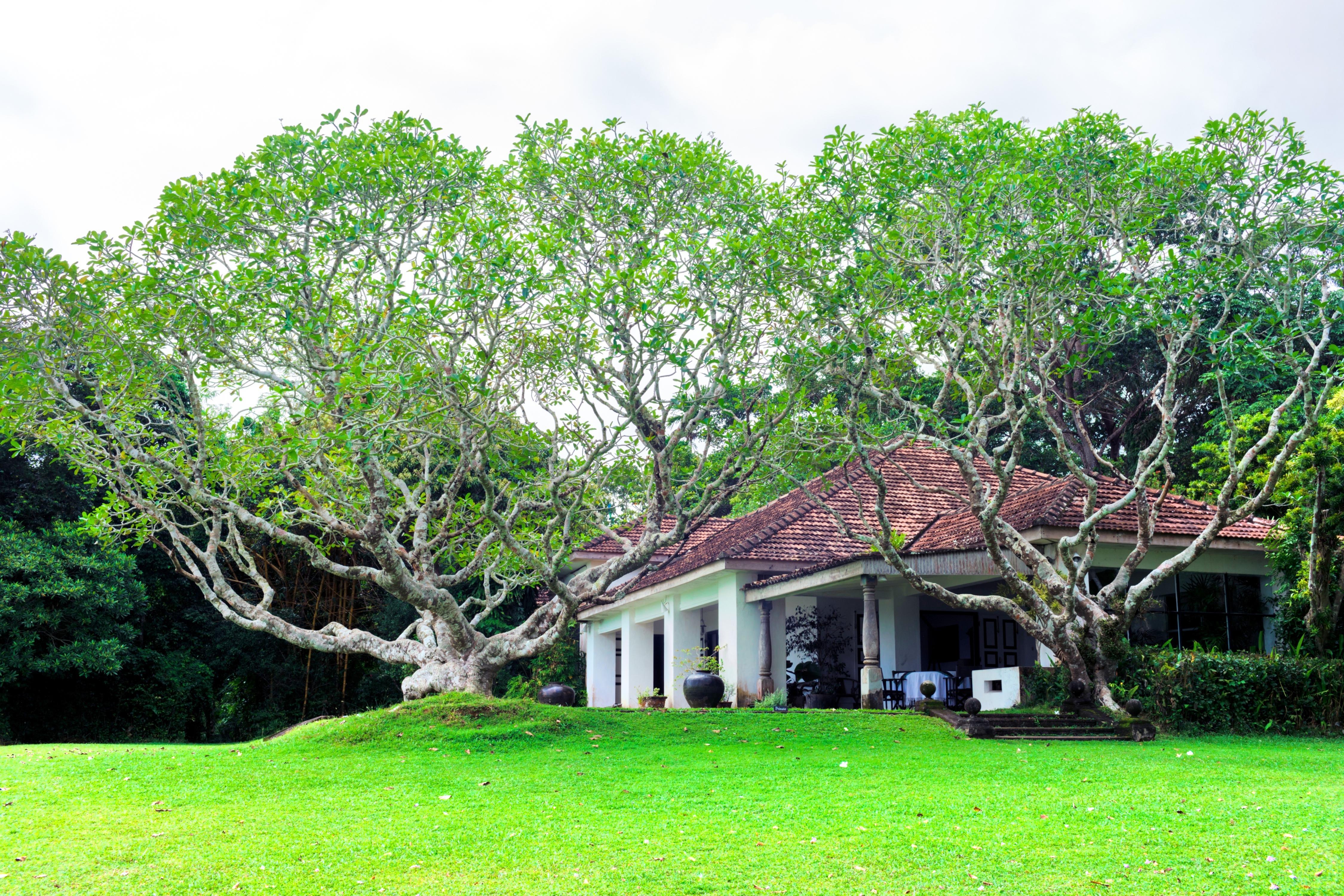 建築師Geoffrey Bawa故居