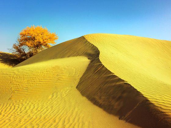 塔克拉瑪幹沙漠(巴音郭楞)