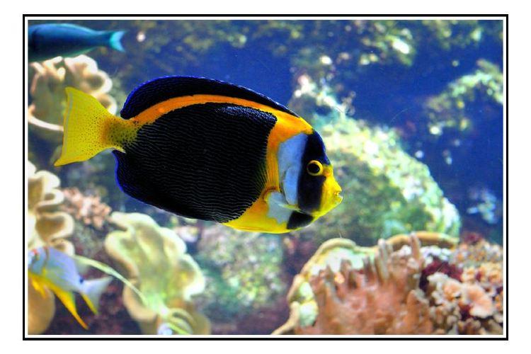 拉羅謝爾水族館3