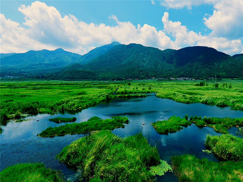 Beihai Wetlands