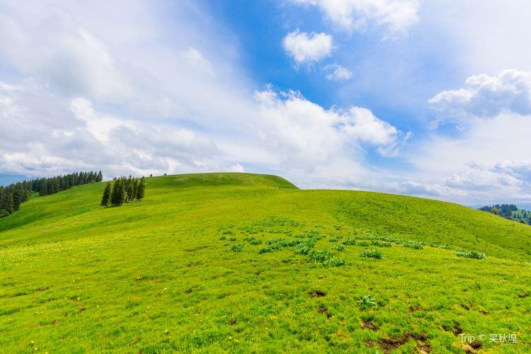 那拉提国家森林公園1