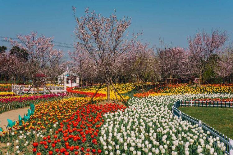 윈란만 꽃밭경관 공원1