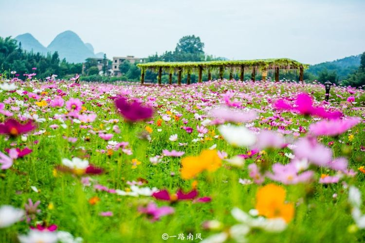 Huangyao Fairy Flower Lake3