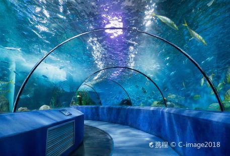 Nanjing Underwater World