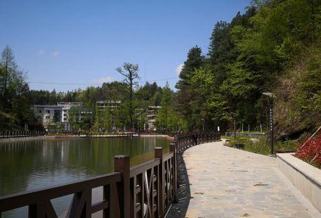 中國水杉植物園