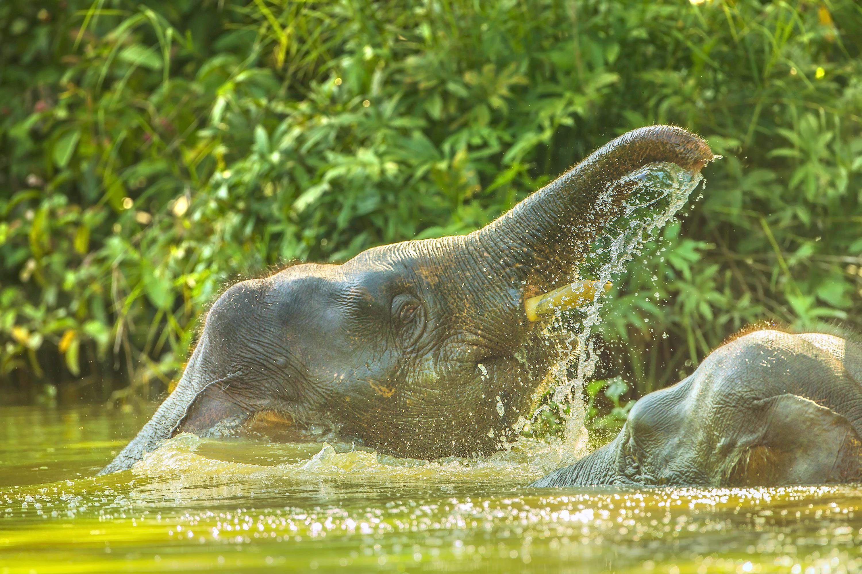 踏繽野生動物保護區