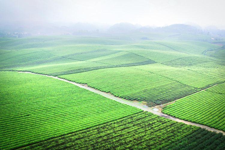 中國茶海景區