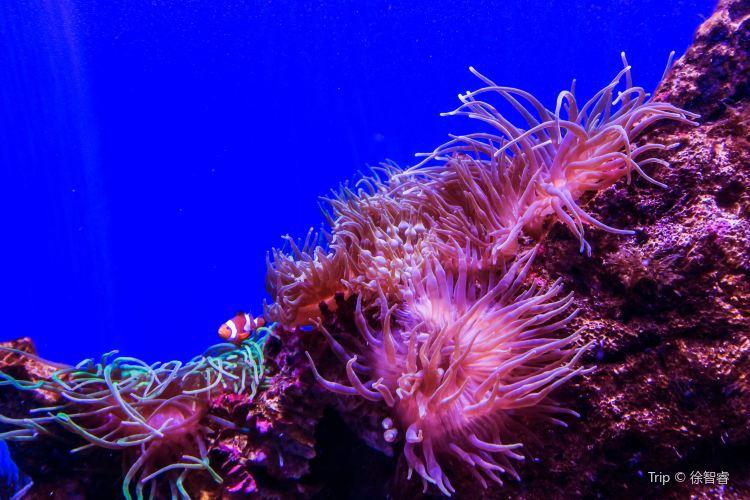 Sea Life Sydney Aquarium2