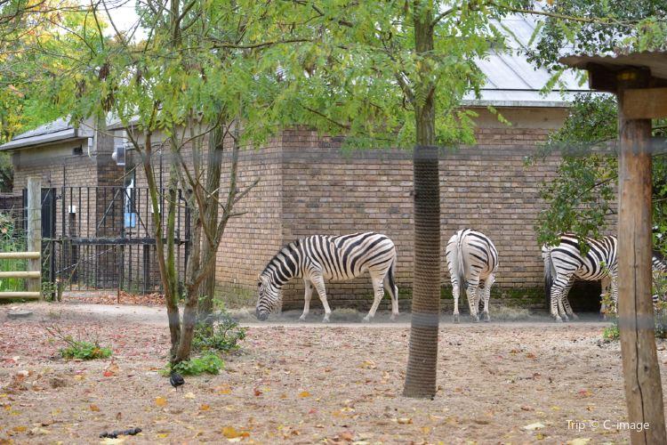 런던 동물원2