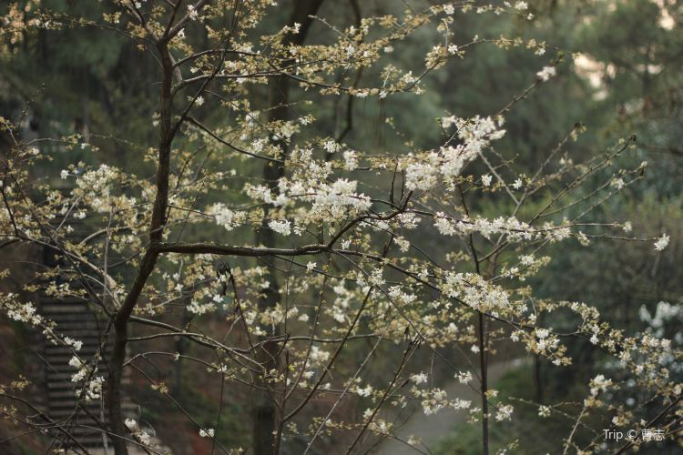 Hunan Forestry Botanical Garden1
