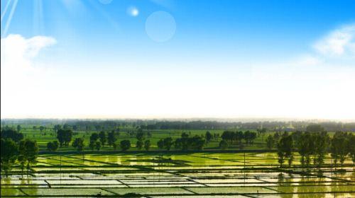 松糧集團中國北方粳稻種子矽穀