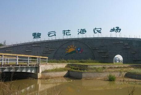 Biyun (Jade Cloud) Flower Ocean Plantation