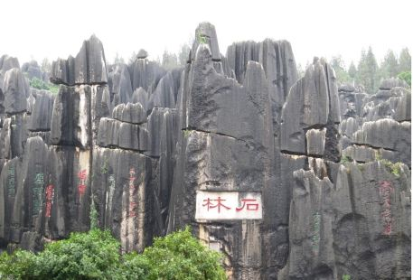 Stone Forest Group