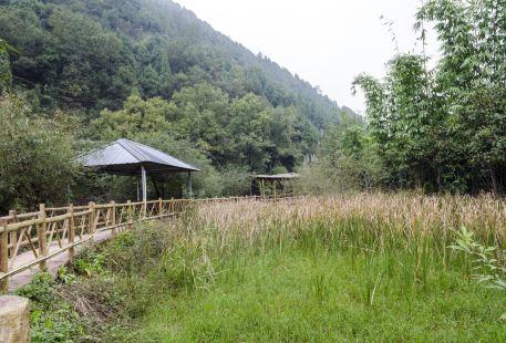 Lihuagou Scenic Area