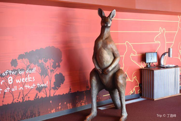 Wild Life Sydney Zoo2