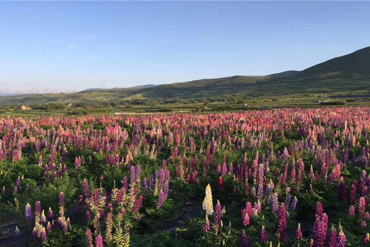 Colorful Flower Sea Scenic Spot1