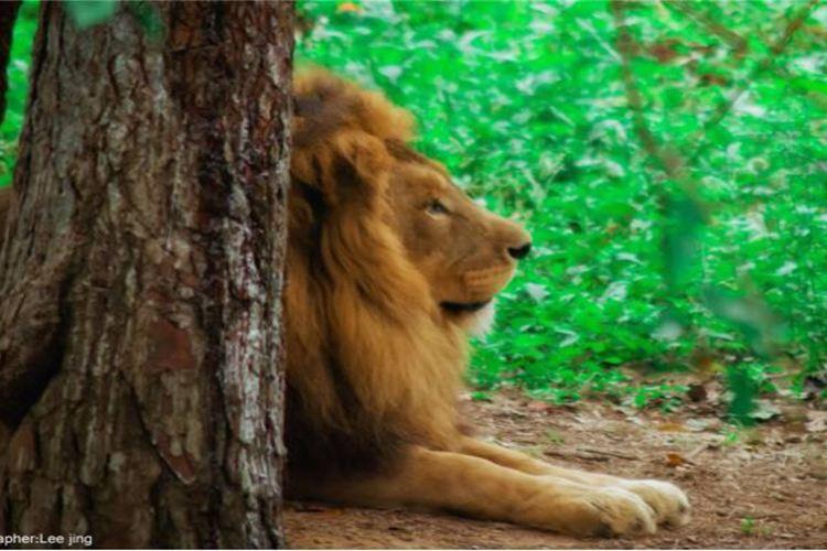 九峰森林動物園1