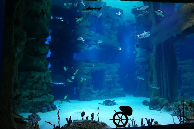 Moscow Oceanarium aka Moskvarium1