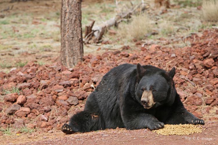 Bearizona Wildlife Park1