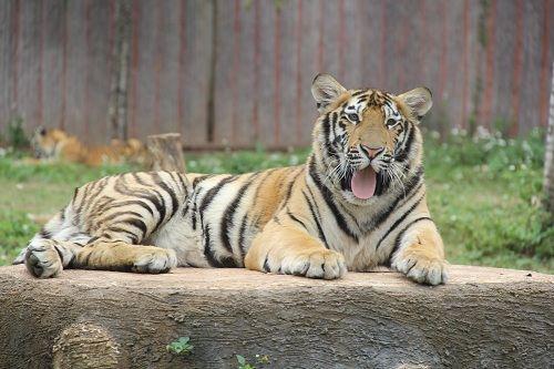 Pingnan Xiongsen Animal World3