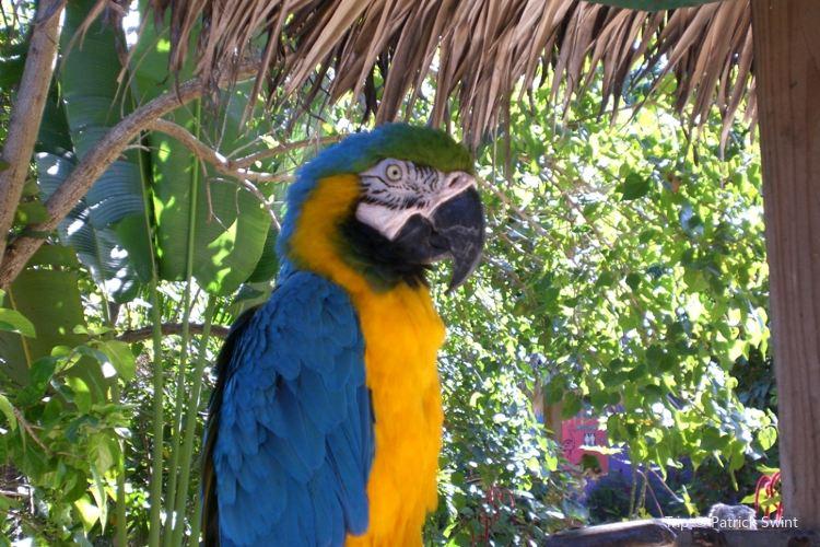 Rand Nature Centre - Bahamas National Trust2