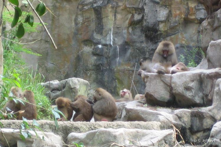 Monkeyland3
