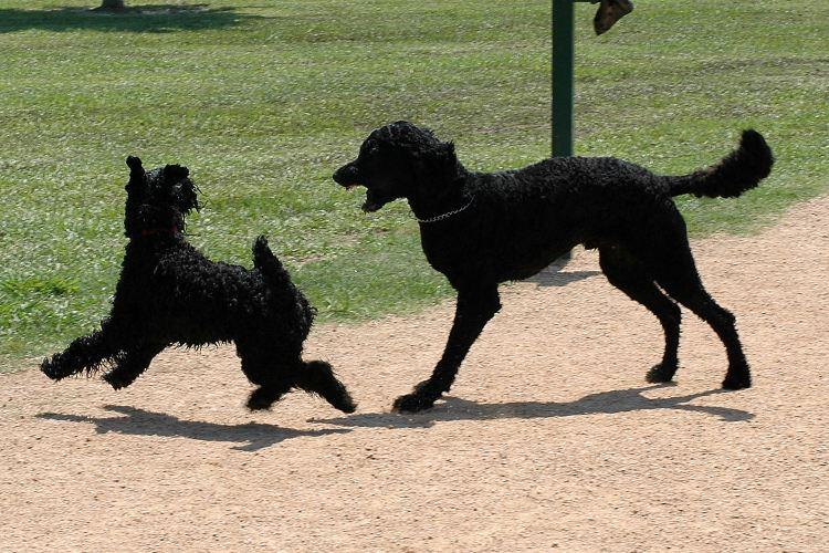 McAllister Dog Park