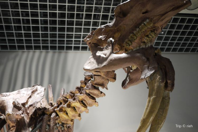 Perot Museum of Nature and Science3